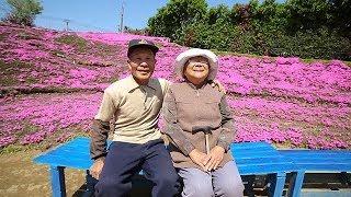 光失った妻に芝桜を 黒木敏幸さんと靖子さん夫妻 宮崎