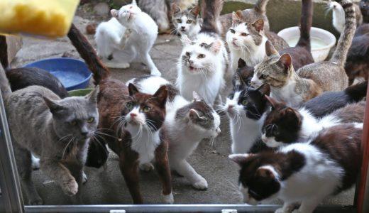 探訪 被災地から 復興に一役〝猫の手〟宮城県石巻市・田代島