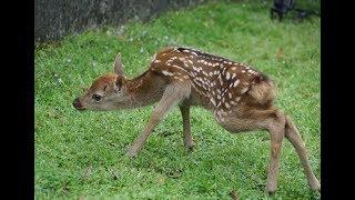 今年最初の鹿の赤ちゃん誕生=奈良公園