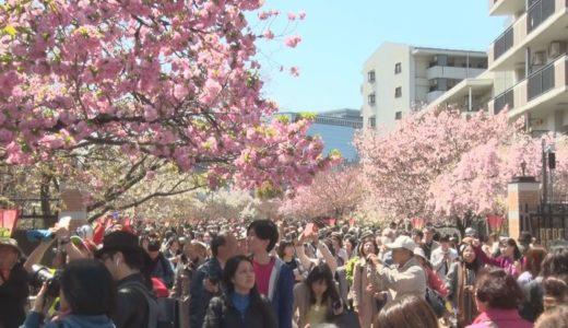 平成最後、桜の通り抜け 大阪市北区の造幣局