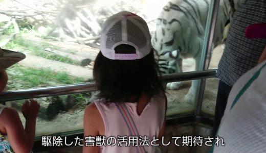 駆除したシカやイノシシ、ライオンやトラの餌に 福岡・大牟田市動物園