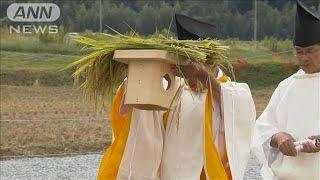 大嘗祭で使う米収穫 栃木、京都で「斎田抜穂の儀」(19/09/27)