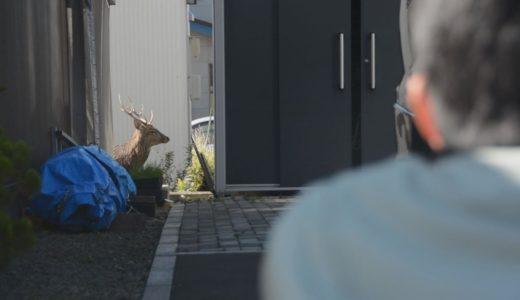 札幌市街地でシカ逃げ回る  約6時間、住民ら驚き