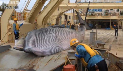 商業捕鯨母船「日新丸」が下関に帰港 ニタリクジラなど223頭捕獲