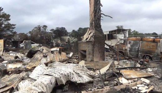 コアラが絶滅危惧種に? 森林火災、過去最悪の町を歩く