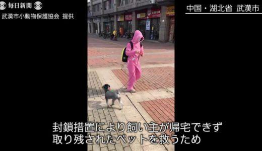 武漢封鎖 取り残されたペットを救護 民間団体