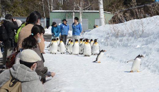 旭山動物園、通常営業中 人気のペンギンもゆっくり観賞