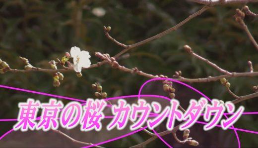 東京の桜の開花 カウントダウン