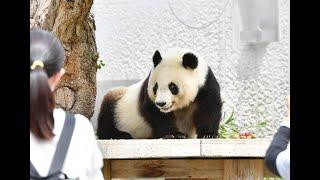 神戸市立王子動物園が再開