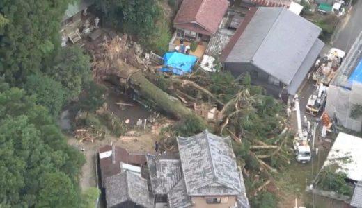 樹齢千年超のご神木倒れる 岐阜、高さ40メートル、大雨で