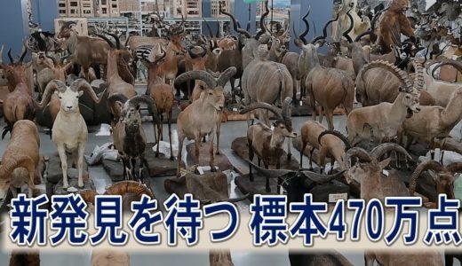 新発見を待つ標本470万点 国立科学博物館(茨城・つくば)