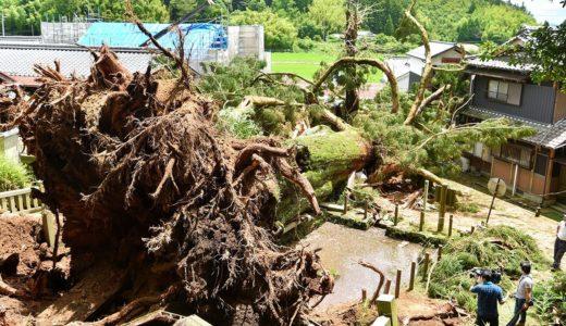 天然記念物の神木倒れる 樹齢1200年超、家屋も破損