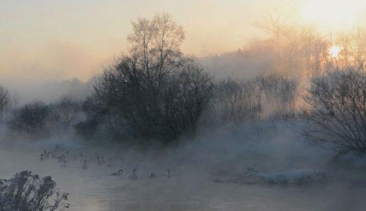 大寒、川霧にハクチョウ 北海道帯広市